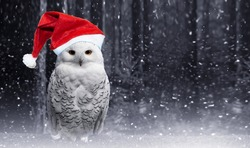 Funny new year polar owl in red Santa hat perch on magic dark forest background with falling snow. Arctic white owl with yellow eyes close up.Predatory bird in wild nature habitat in winter.Copy space