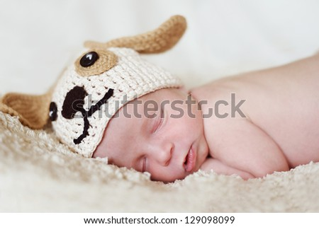 funny newborn wearing dog hat