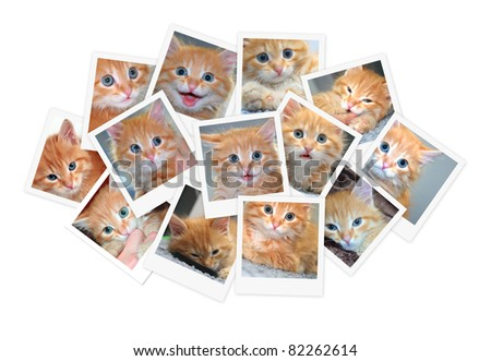 Funny orange kitten, collage of photos for your design