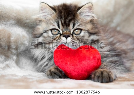Funny Persian kitten cat marble color coat with red heart #1302877546