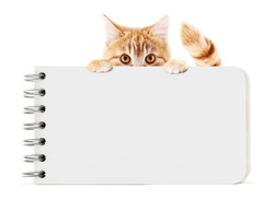 funny pet cat showing a block notes isolated on white background blank template and copy space
