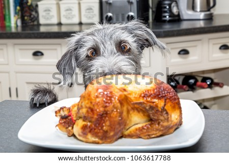 Funny photo of a bad dog with paws on kitchen counter looking at a roasted chicken with big excited eyes