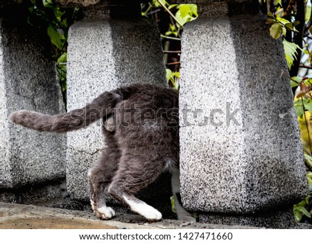 funny photo of cat wich plays hide and sick, hid between the pillars and thinks that nobody can see it. We can see only back and back legs of it