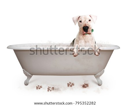Funny photo of dirty dog in bathtub with paws hanging over edge