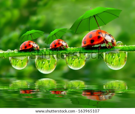 Funny picture from nature. Little ladybugs with umbrella walking on the grass.