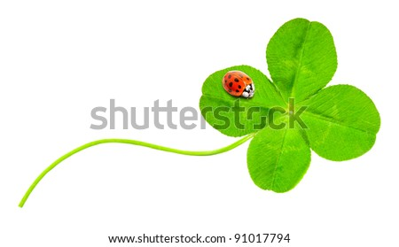 Funny picture of four leaf clover and ladybug. - stock photo