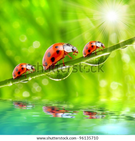 Funny picture of the ladybugs family running on a grass bridge over a spring flood.