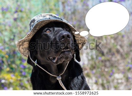 Funny picture with bubble idea dog labrador with army camouflage hat.