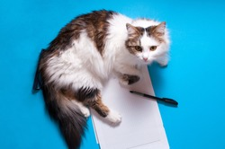 Funny playfull cat lying on office desk. Top view of blue office desk with white sheet of notepad with free copy space, pen, glasses