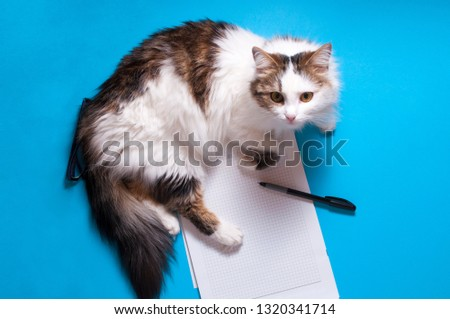 Funny playfull cat lying on office desk. Top view of blue office desk with white sheet of notepad with free copy space, pen, glasses #1320341714