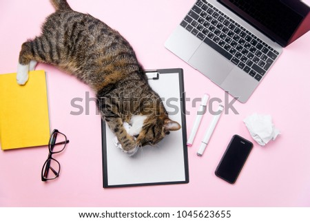Funny playfull cat lying on woman's office desk and playing with crumpled paper balls. Pink office desk with white sheet of paper with free copyspace, laptop, smart phone, notebook and supplies. #1045623655
