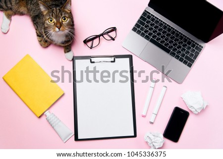 Funny playfull cat lying on woman's office desk. Top view of pink office desk with white sheet of paper with free copy space, laptop, smart phone, glasses, notebook, crumpled paper balls and supplies. #1045336375