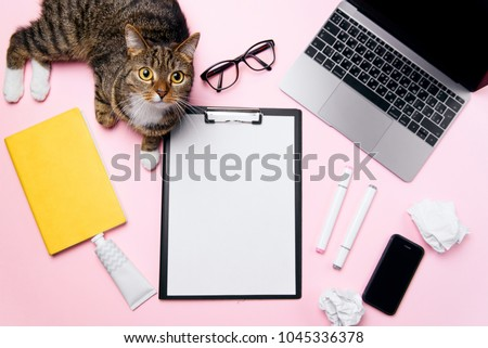 Funny playfull cat lying on woman's office desk. Top view of pink office desk with white sheet of paper with free copy space, laptop, smart phone, glasses, notebook, crumpled paper balls and supplies. #1045336378
