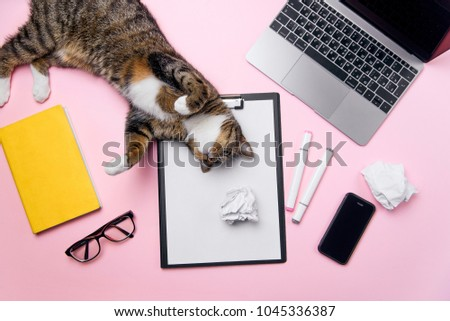 Funny playfull cat lying on woman's office desk. Top view of pink office desk with white sheet of paper with free copy space, laptop, smart phone, glasses, notebook, crumpled paper balls and supplies. #1045336387