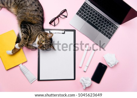 Funny playfull cat lying on woman's office desk. Top view of pink office desk with white sheet of paper with free copy space, laptop, smart phone, glasses, notebook, crumpled paper balls and supplies. #1045623649