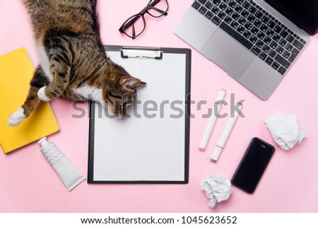 Funny playfull cat lying on woman's office desk. Top view of pink office desk with white sheet of paper with free copy space, laptop, smart phone, glasses, notebook, crumpled paper balls and supplies. #1045623652