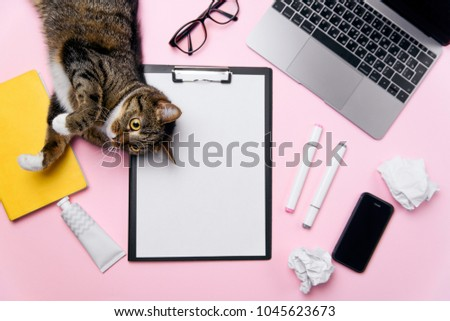 Funny playfull cat lying on woman's office desk. Top view of pink office desk with white sheet of paper with free copy space, laptop, smart phone, glasses, notebook, crumpled paper balls and supplies. #1045623673