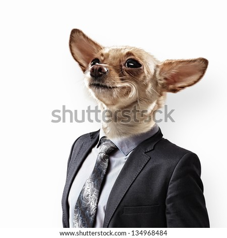 Funny portrait of a dog in a suit on an white background. Collage. - stock photo