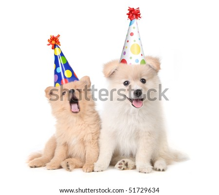 Funny Puppies Celebrating a Birthday Wearing Silly Hats on White