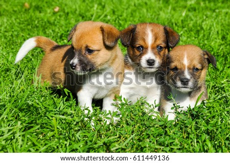funny puppies on green grass background #611449136