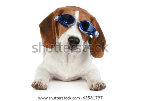Funny puppy in blue glasses on a white background