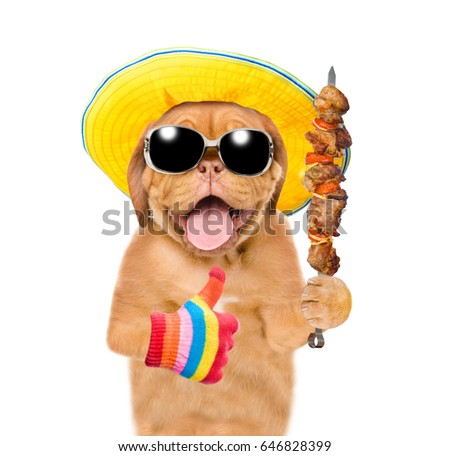 8707d3b9dea708 Funny puppy in summer hat and sunglasses with grilled meat on skewer  showing thumbs up.
