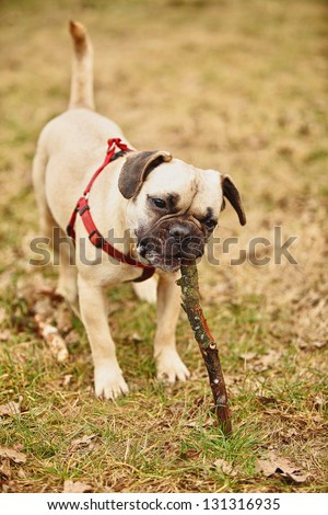 funny puppy playing with stick