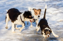 Funny puppy slips and sliding on ice