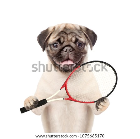Funny puppy with tennis racket. isolated on white background #1075665170