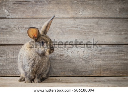 funny rabbit on wooden background