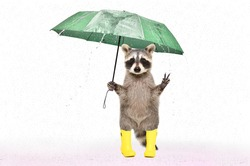 Funny raccoon in rubber boots  under an umbrella in the rain isolated on white background