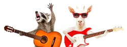 Funny raccoon with acoustic guitar and goat with electric guitar isolated on white background
