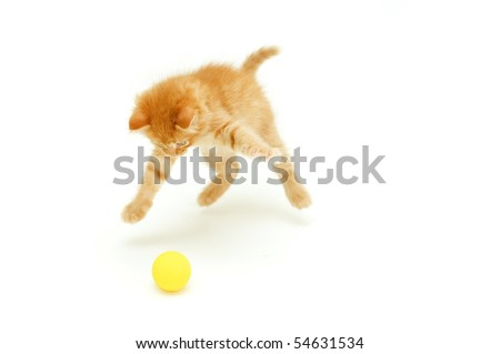 funny red kitten hunts for ball isolated on white background
