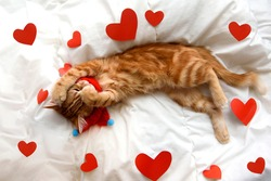 funny red kitten with heart on the white blanket. concept of love valentines day pets