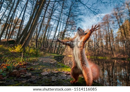 Photo of  Funny red squirrell standing in the forest like Master of the Universe. Comic animal