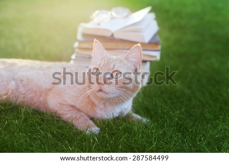 Funny scared cat lying on green grass with vintage book and glasses