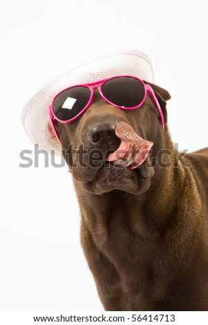 Funny Sharpei with white hat and sunglasses, licking lips