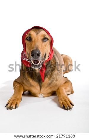 Funny shot of dog as Little Red Riding Hood based on the famous fairy tale