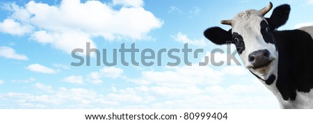 Funny smiling cow on blue cloudy sky background with copyspace