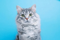 Funny smiling gray tabby cute kitten with green eyes. Portrait of lovely fluffy cat.
