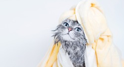 Funny smiling wet gray tabby cute kitten after bath with big blue eyes. Pets and lifestyle concept. Just washed lovely fluffy cat with towel around his head on grey background.