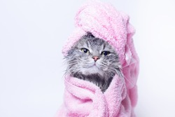 Funny smiling wet gray tabby cute kitten after bath wrapped in pink towel with beautiful eyes. Pets and lifestyle concept. Just washed lovely fluffy cat with towel around his head on grey background.