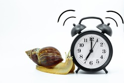 Funny snail Achatina, with painted eyes crawls to the black, ringing alarm clock, on a white background, the concept of slow-moving time.Copy space.