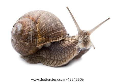 Funny snail isolated on white background
