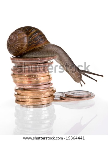 Funny snail sitting on a pile of dollars