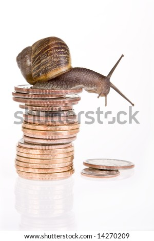 Funny snail sitting on a stack of dollar coins