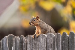 Funny Squirrel using fence as protective barrier