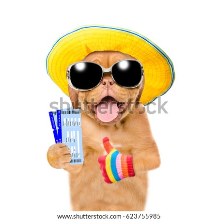 c7ea4fc799d346 Funny summer puppy with sunglasses holding airline tickets and showing  thumbs up. isolated on white