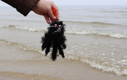 funny toy black cat is held in hand by the scruff of the neck on the beach by the sea