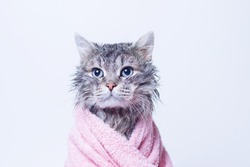 Funny wet gray tabby cute kitten after bath wrapped in pink towel with blue eyes. Pets and lifestyle concept. Just washed lovely fluffy cat on grey background.